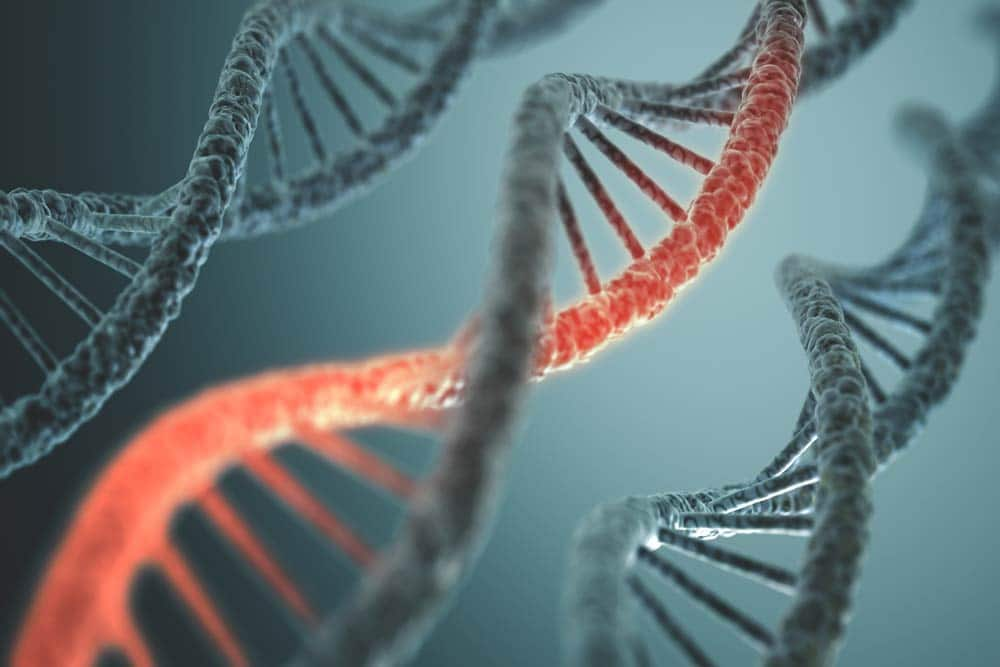 Do Genes Play a Role in Becoming an Addict?